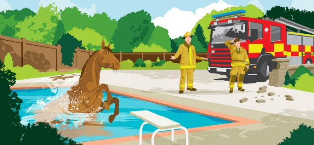 Horse jumps into swimming pool